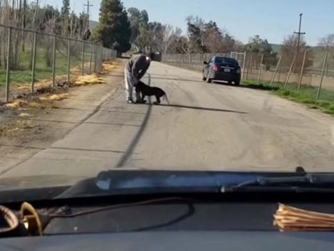 Abandona a su perro empujándolo y pateándolo en plena carretera