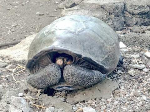 Hallan en Ecuador una tortuga que se creía extinta desde hace un siglo
