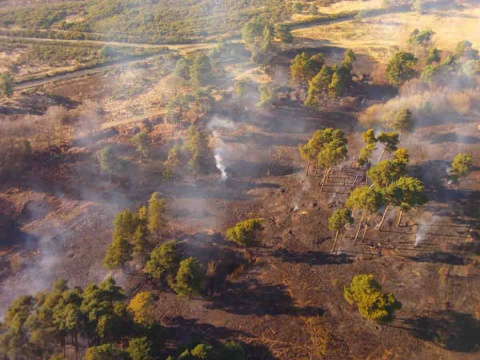Incendio consume el 'Bosque de los Cien Acres' de Winnie the Pooh
