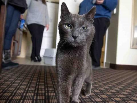 ¿Tu gato es gruñón? Imitan la personalidad de sus dueños