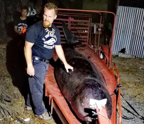 Hallan en Filipinas una ballena muerta con 40 kilos de plástico en el estómago
