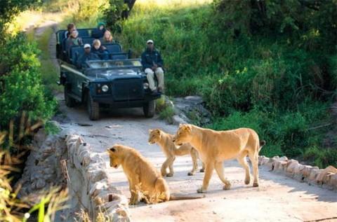 Cazador cazado: solo hallan cráneo tras ser atacado por elefante y leones