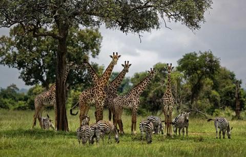 Un millón de especies está en riesgo de extinción, alertan científicos
