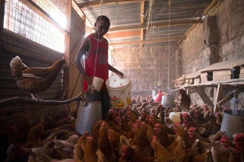 Reciclan excremento humano para producir alimento para animales
