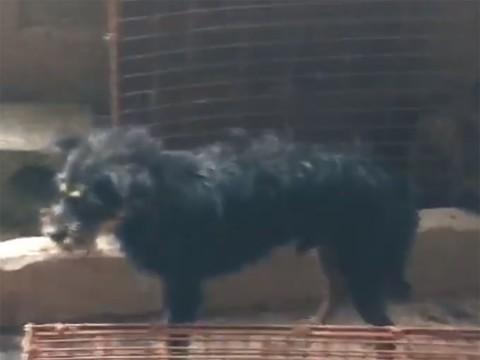 perrito liberado de horrible muerte en china