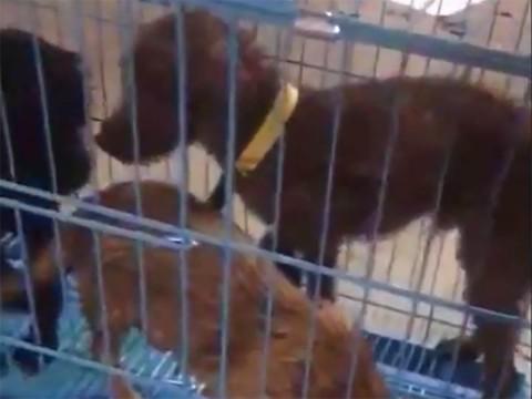 perritos salvados de morir cocinados