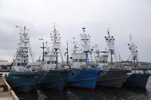 Reanuda Japón caza comercial de ballenas tras más de 30 años