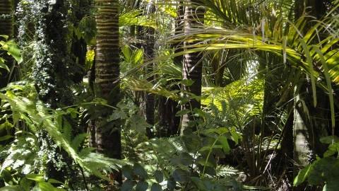 Procesan en Brasil a cazador furtivo por matar a más de mil jaguares
