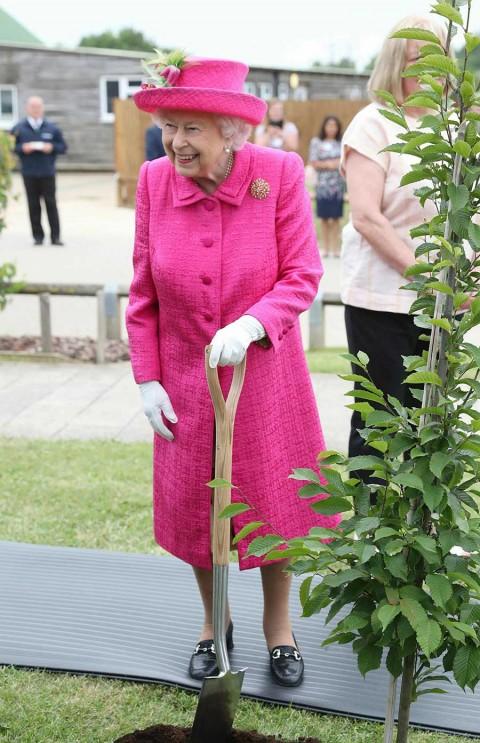 ¡Sáquense! Reina Isabel II rechaza ayuda y planta sola un árbol