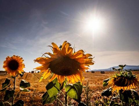 Julio de 2019, el mes más caluroso registrado en la historia
