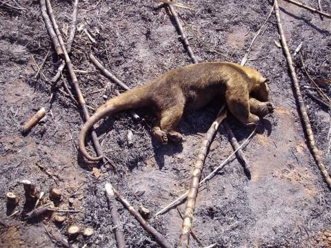 Culpa Bolsonaro a ONG de incendios en la Amazonia