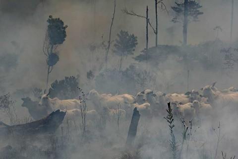 Crece 91 por ciento deforestación de la Amazonia en Brasil