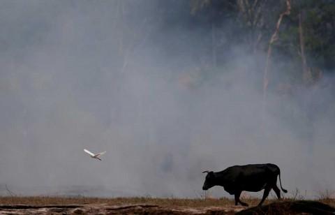 Sufre Amazonia mayor deforestación en 11 años