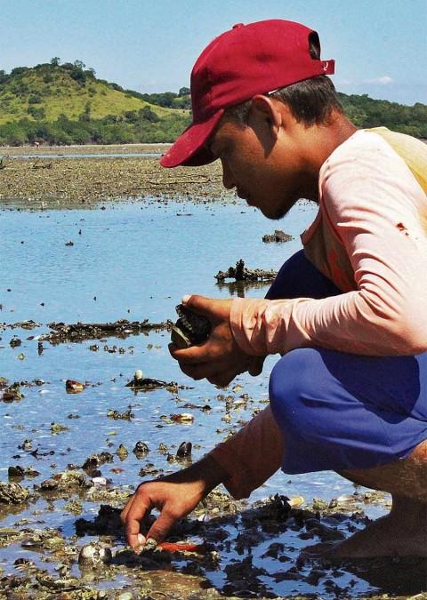 Muerte masiva de moluscos causa alarma en El Salvador