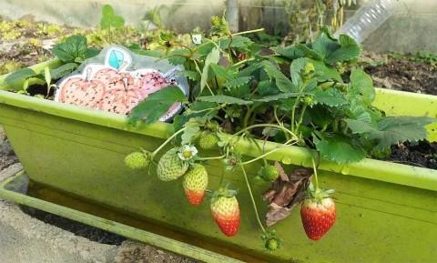 Así puedes hacer tu huerto urbano y comer saludable