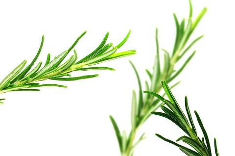 5 plantas medicinales que debes tener en casa... y puedes cultivar