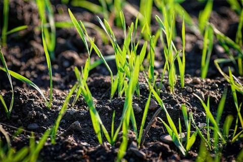 Cómo hacer bombas de semillas, un artefacto para reverdecer la tierra