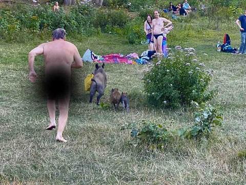 Nudista alemán emprendió una persecución de 'película' contra un Jabalí