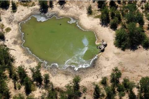 Descubren causa de muerte masiva de 330 elefantes este año en África