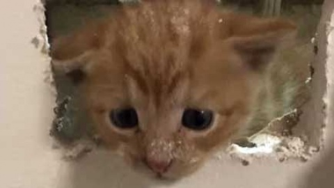Bomberos usan alta tecnología para rescatar a... gatito