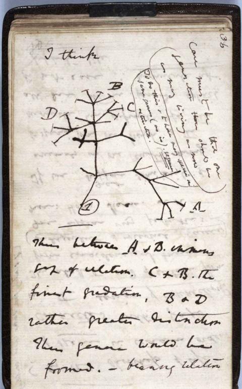 Roban 2 valiosos cuadernos de Darwin en la Universidad de Cambridge