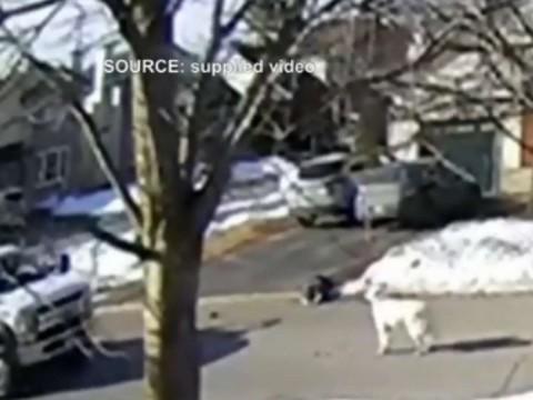 Perrito para el tráfico para salvar a su dueña, que se desmayó