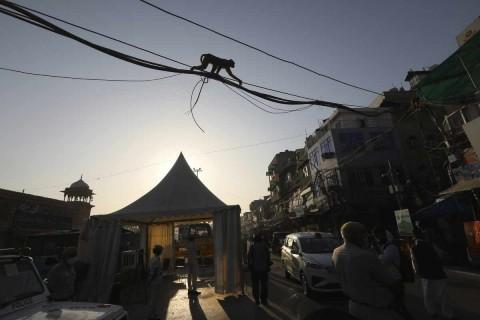 Cae banda de ladrones en India que utilizaba monos amaestrados para robar
