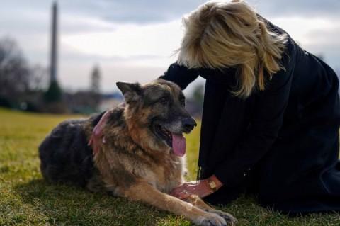 Los Biden están de luto: muere su perro 'Champ', amigo por 13 años