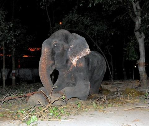 Hombre que ató hocico a su perrita irá a la cárcel | Blog de los Animales - Página 11 Raju