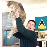 Festejan con gatos en #RaisetheCat
