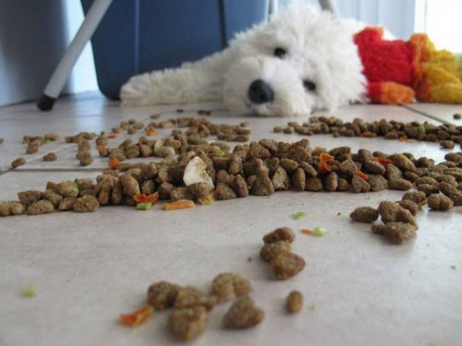 3. Probar comida de perro (727 mil 304 pesos al año). ¿Así que te dices un amante y defensor de los perros? Que mejor que probar los alimentos que las marcas se preparan para lanzar al mercado.