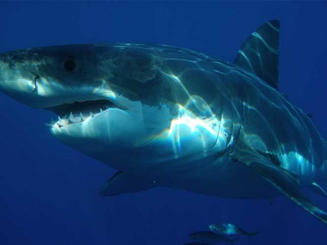 Tiburón ataca y mata a náufrago venezolano