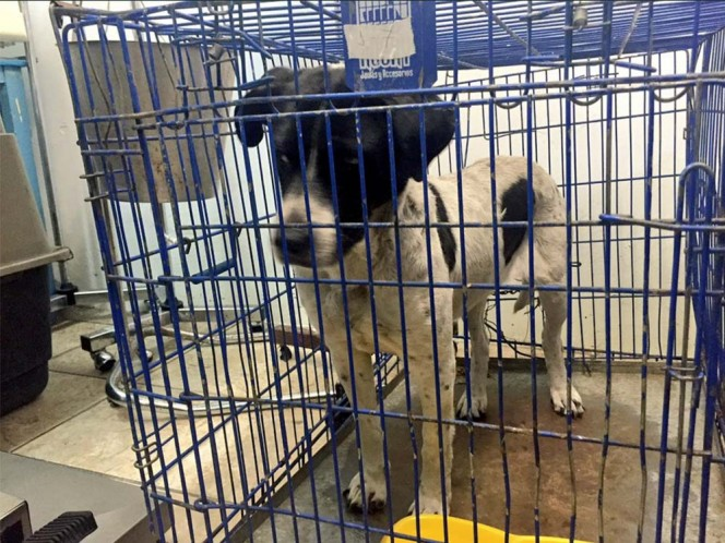 Los tres perros fueron llevados a revisión veterinaria donde presentaron buen estado de salud.