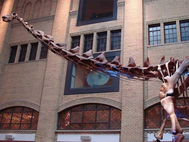 Nueva York exhibirá réplica de titanosaurio, uno de los mayores dinosaurios