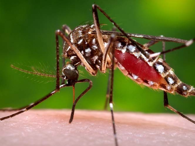 Estados Unidos emite alertas de viaje por propagación del zika