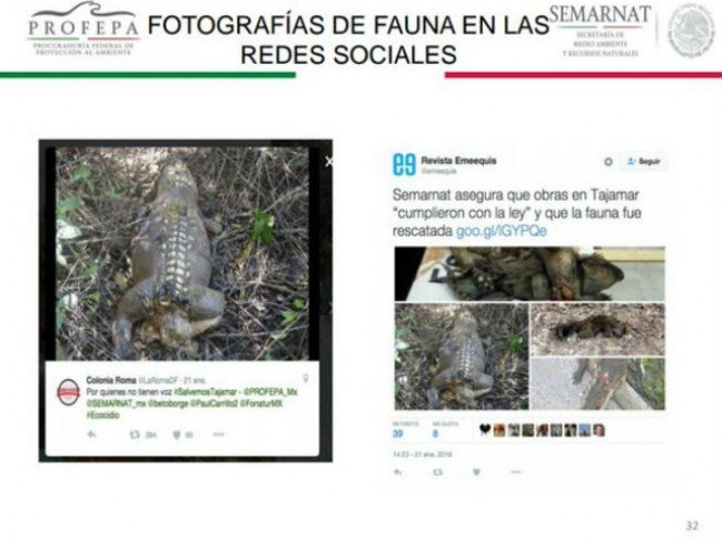 Fotos de cocodrilos muertos difundidas en redes sociales