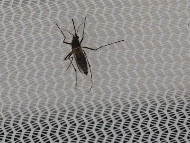 Hallan virus del zika en cerebro de feto