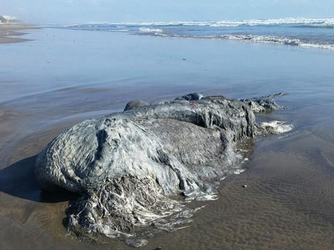 La criatura mide unos 4 metros de largo