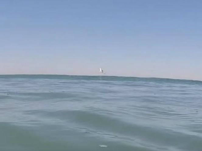 Dos surfistas grababan desde un drone sus hazañas, cuando captaron al animal saltando del agua
