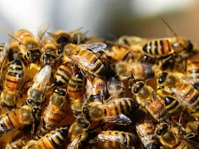 Abrieron un hoyo en el techo para retirar las abejas.