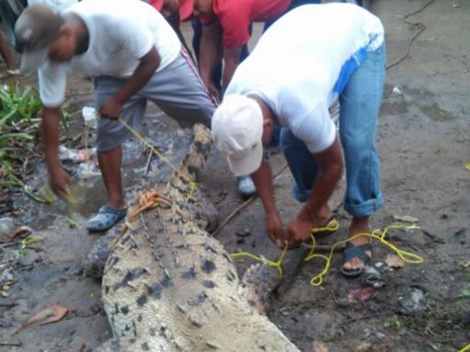 El reptil rondaba cerca de un hotel localizado en la playa de La Bocana, municipio de Marquelia
