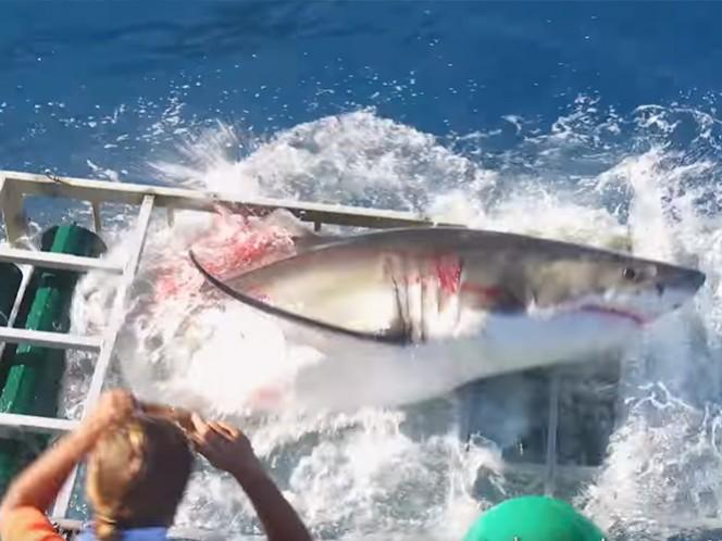 El tiburón logró romper un costado de la jaula, afortunadamente el buzo resultó ileso. ( Fotos tomadas de: YouTube Gabe and Garret)