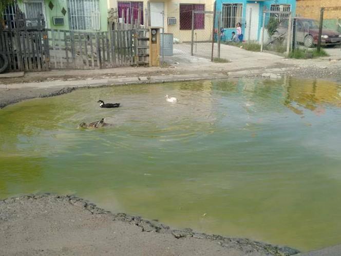 Patos nadan en baches en Nuevo Laredo