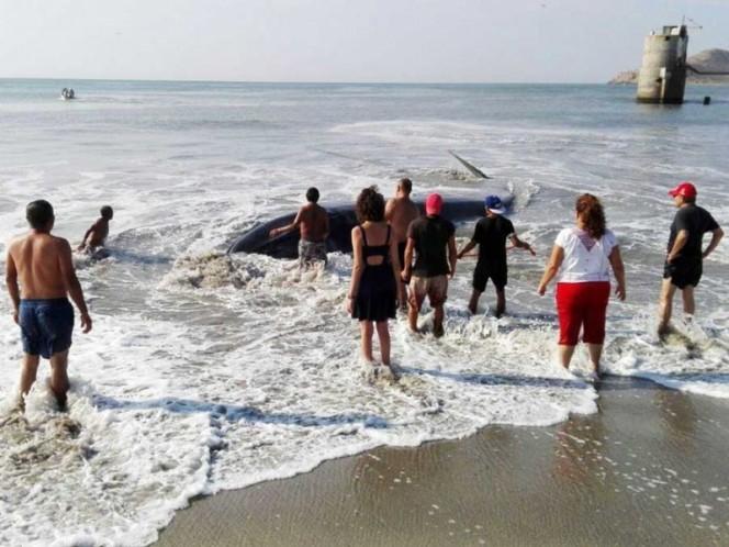 Hallan ballena varada en Playa del Istmo