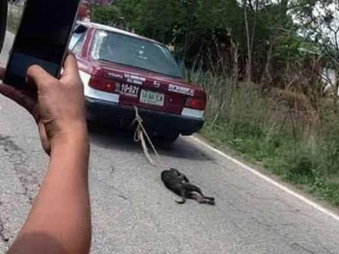 Indigna en redes sociales vídeo de maltrato animal en Oaxaca