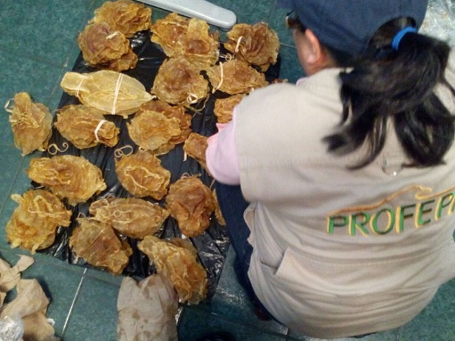 Aseguran 375 buches de Totoaba en Aeropuerto de Tijuana — FOTOS