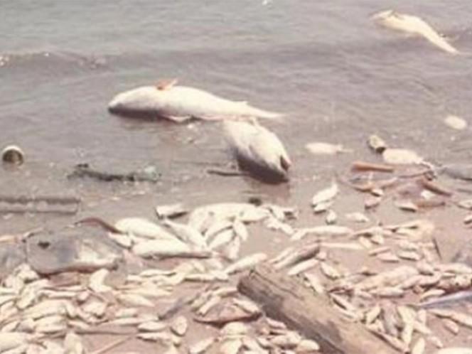 Zona muerta del Golfo de México impone nuevo y 'terrorífico' récord