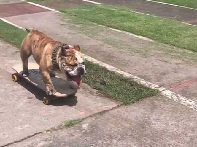 280 bulldogs compitieron en el Tercer Gordotón en CU