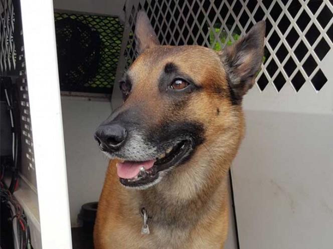 EU entrega 25 caninos detectores de armas, droga y dinero a México
