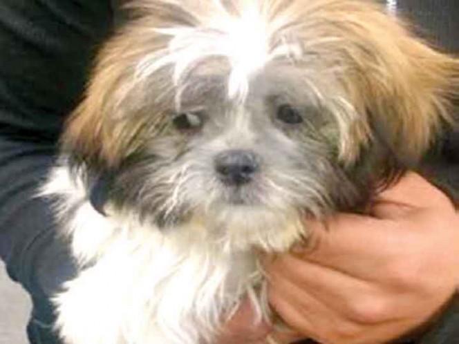 Tres detenidos por robar perro de 30 mil pesos en tienda